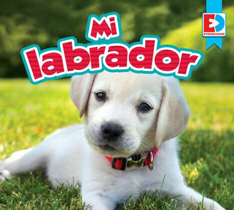 Mi labrador