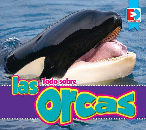 Todo sobre las orcas