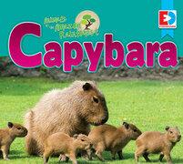 Animals of the Amazon Rainforest: Capybara