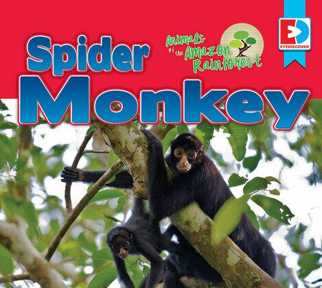 Animals of the Amazon Rainforest: Spider Monkey
