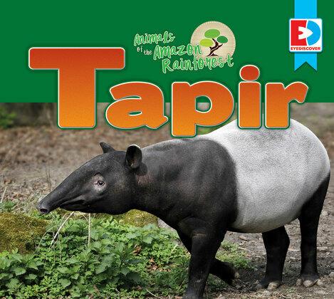 Animals of the Amazon Rainforest: Tapir