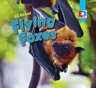 All About Flying Foxes