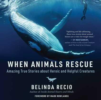 When Animals Rescue