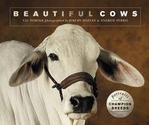 Beautiful Cows