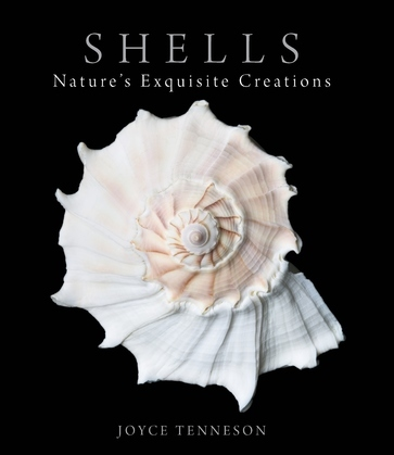 Shells: Nature's Exquisite Creations