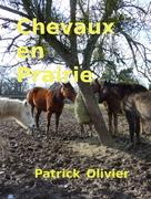Chevaux en Prairie