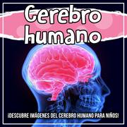 Cerebro humano: ¡Descubre imágenes del cerebro humano para niños!