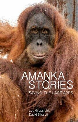 Amanka Stories