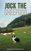 Jock the Sheepdog