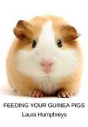 Feeding Your Guinea Pigs