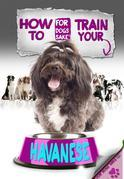 How to Train Your Havanese