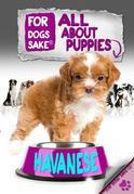 All About Havanese Puppies