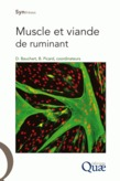 Muscle et viande de ruminant