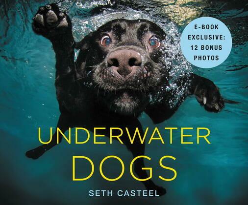 Underwater Dogs