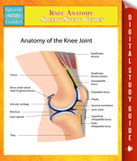 Knee Anatomy Speedy Study Guides