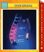Spine (Human) Speedy Study Guides