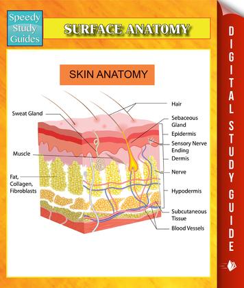 Surface Anatomy Speedy Study Guides