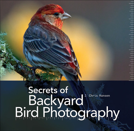 Secrets of Backyard Bird Photography