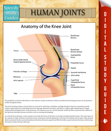 Human Joints: Speedy Study Guides