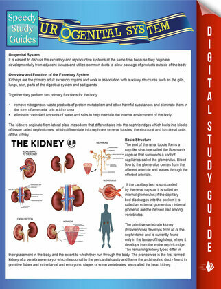 Urogenital System (Speedy Study Guides)