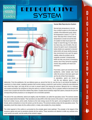 Reproductive System (Speedy Study Guides)